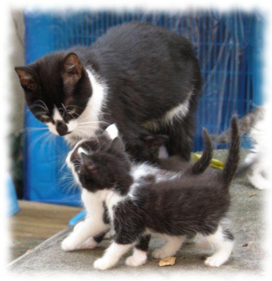 chatons-le-pecq-france-1082140188-1324578[1]