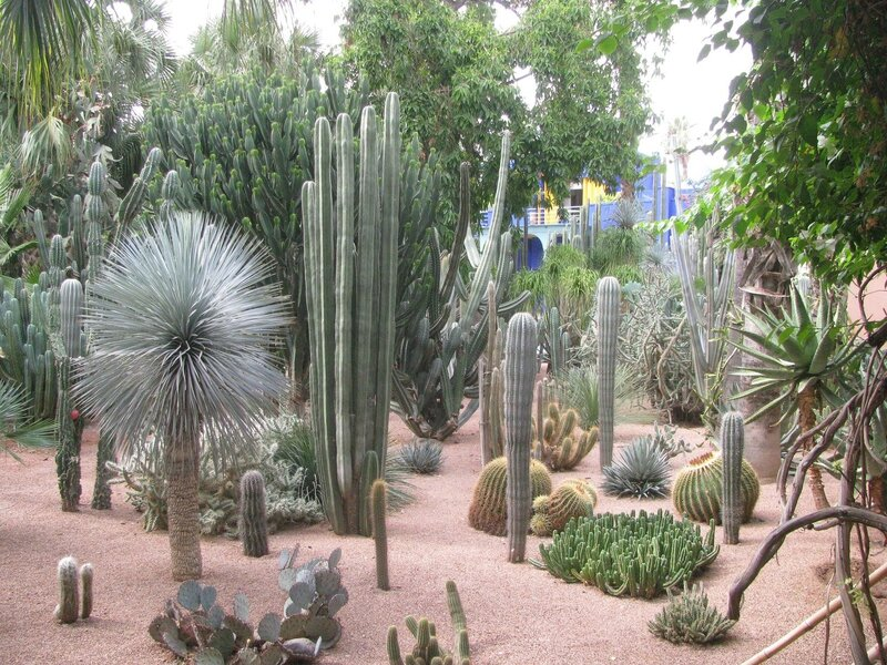 Le jardin majorelle fan au maroc for Jardin villa maroc
