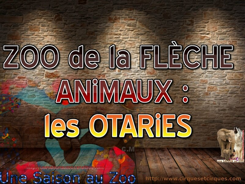 _ ZOO de la FLECHE Les ANiMAUX les OTARiES