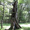 Mystères d'arbres 31.