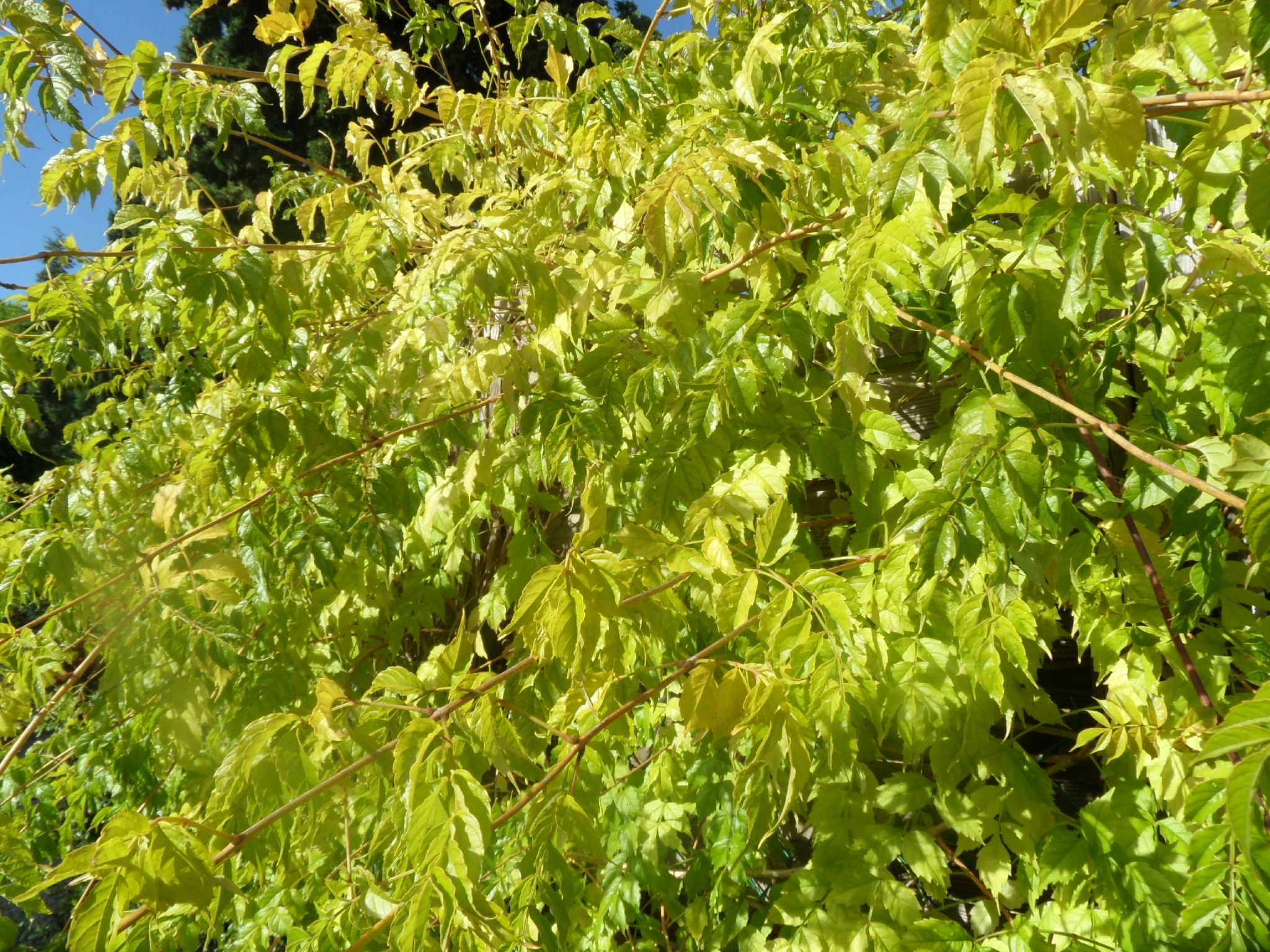 Entre gris et bleu jardin du soleil et du coeur - Petit insecte rouge jardin besancon ...