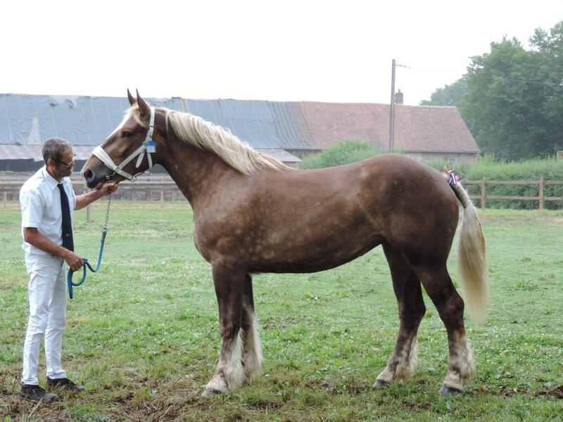 Emy de Tourville - 2 Juillet 2017 - Concours d'élevage local - Menerval (76) - 1ere (3 ans)