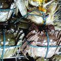 02 Qingdao Septembre 2009