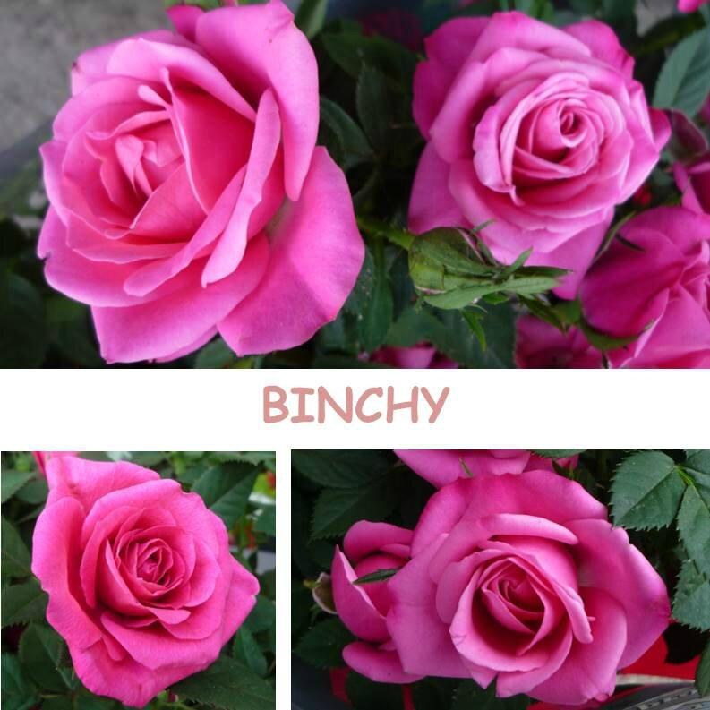 binchy