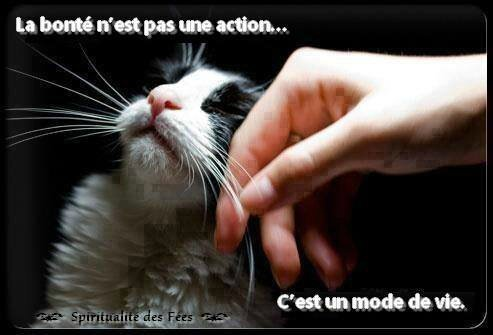 solution orale pour chats semintra