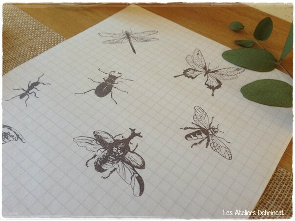 insectes3