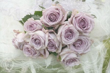 lilac roses2