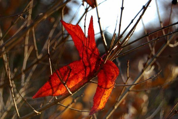 arbres__parcs_B_W_0241_blog
