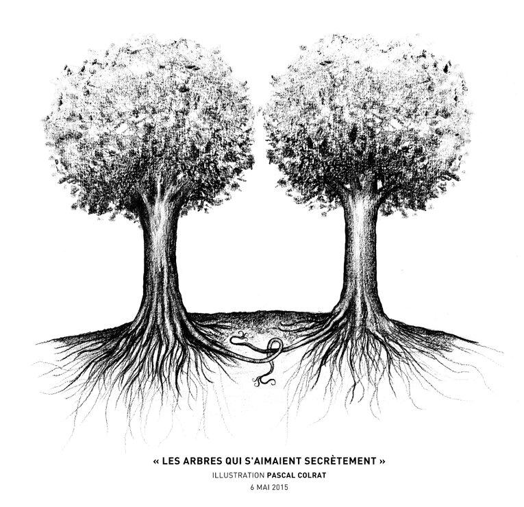les arbres secret