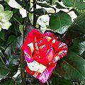 Jardin Poterie Hillen 12061687