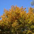2009 10 30 Les beautée de l'automne (9)