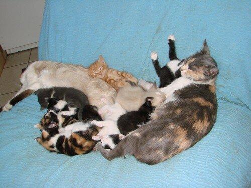 2008 04 14 Papillon et Blanco avec leurs chatons