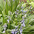 fleurs-sente (1)