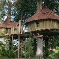 Abane - construction de cabanes dans les arbres