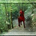Ballade à cheval 1