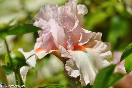 Iris-Vanity-3