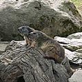 05 Les Marmottes (1)