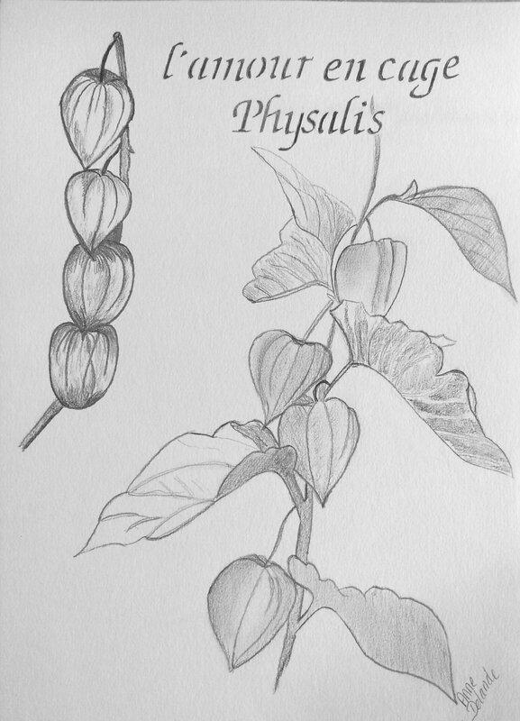Physalis 16 10 2014