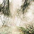 Mystique wood