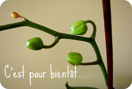 pour_bientot