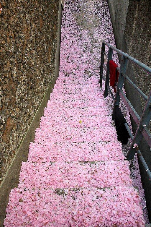 9-escalier fleuri_9219