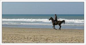 cheval_cavalier_court_profil