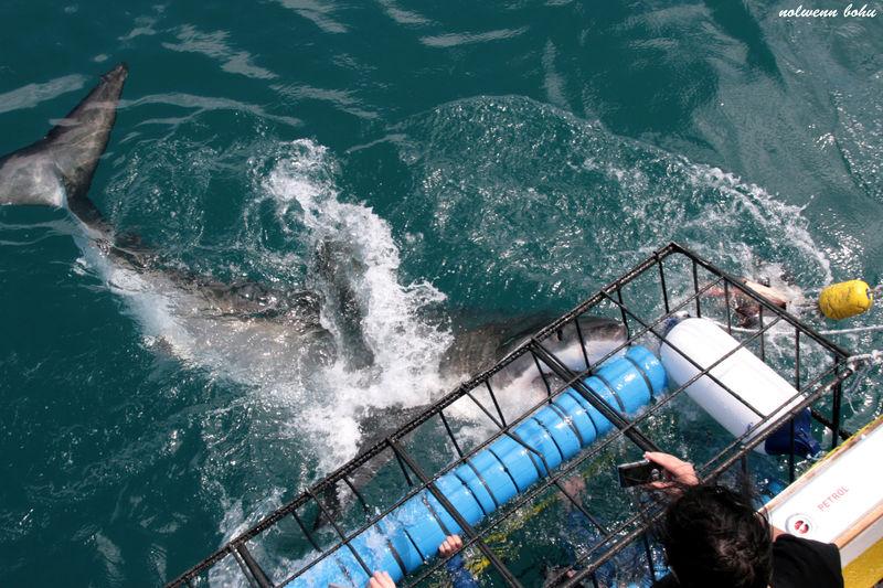 Shark attack 5