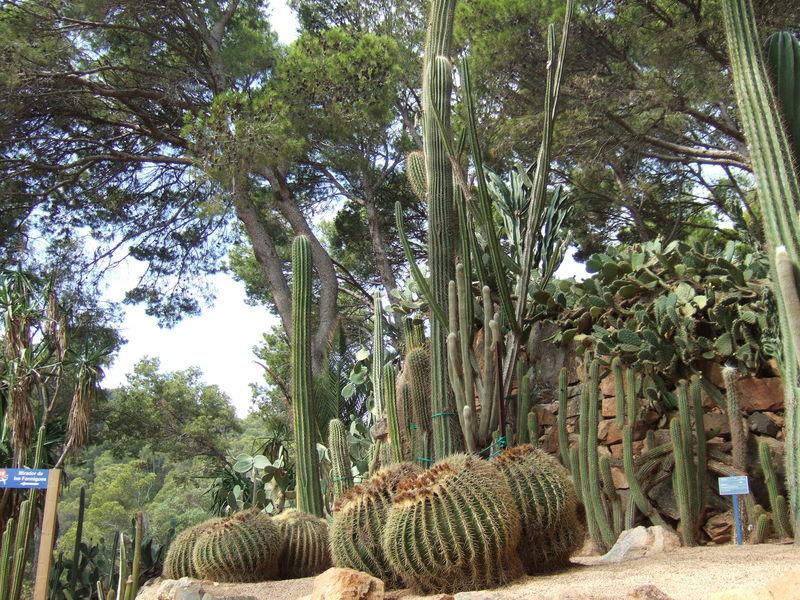 Le jardin de cap roig le pinceau d 39 annie for Jardines cap roig