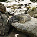 05 Les Marmottes (2)