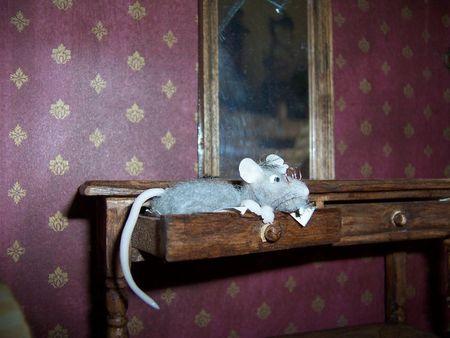 Rat 21