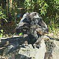 cdv_20140515_09_zoo