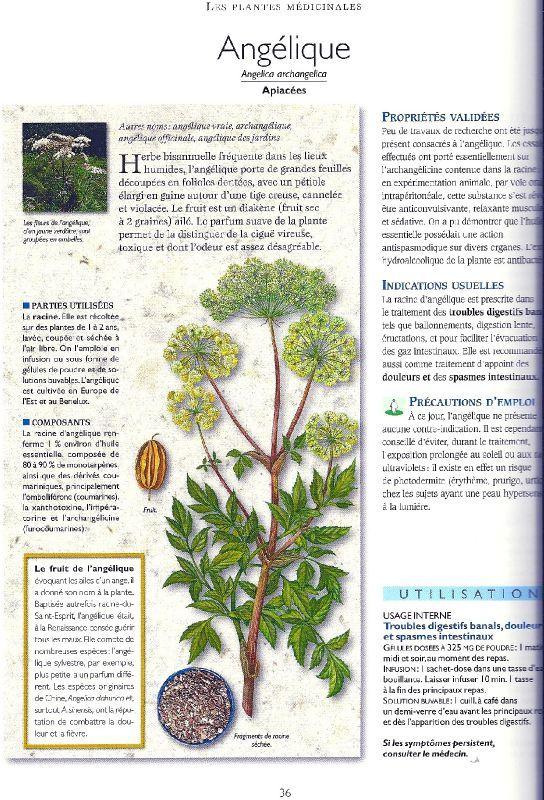 Livre : 'Secrets et vertus des plantes médicinales'