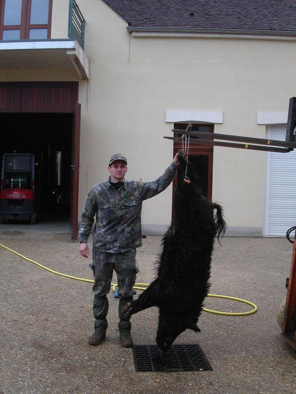 Sanglier de 110 Kg tué par un autre chasseur