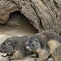05 Les Marmottes (21)