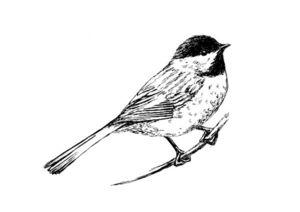 oiseau_paridae_t18984
