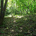 Sortie en forêt 26.