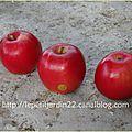 Naissance d'une nouvelle variété de pomme