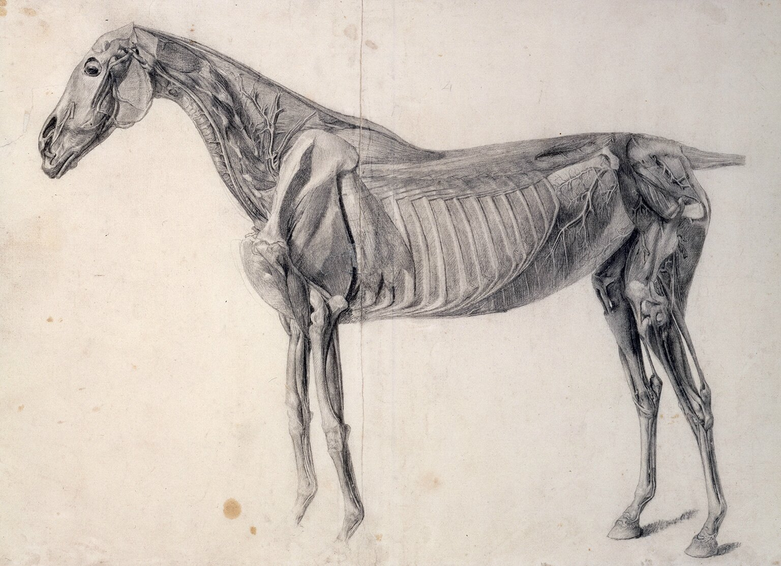 Exhibition of animal portraits by George Stubbs opens at the ...