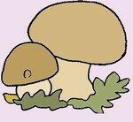 champignon