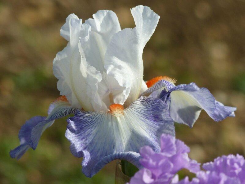 iris conjuration (3)