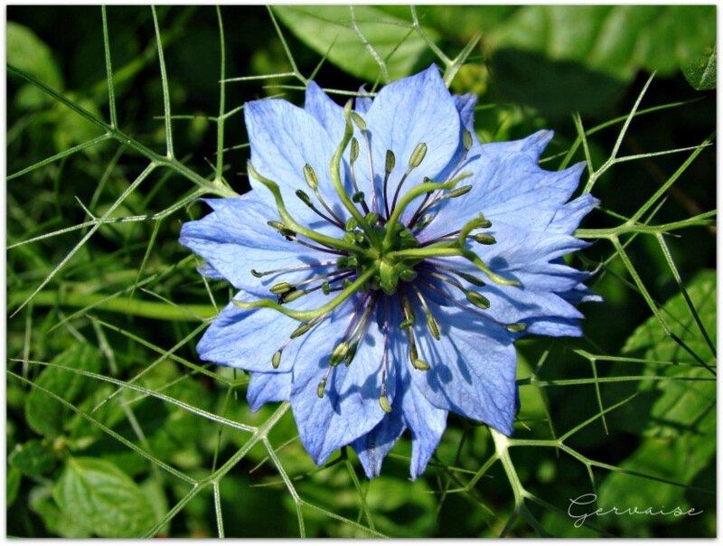 S20-fleur