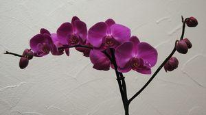 orchid_e_blog