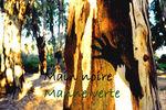 main_noire_manne_verte_bis