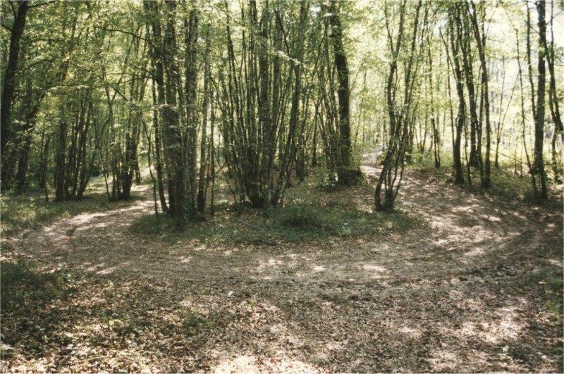 chemin sous les bois Bos Carat