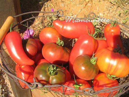 Tomates___l_ancienne_cueillette_jeudi_5