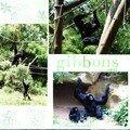 gibbons 4