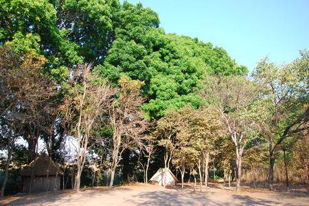Zambie (294)