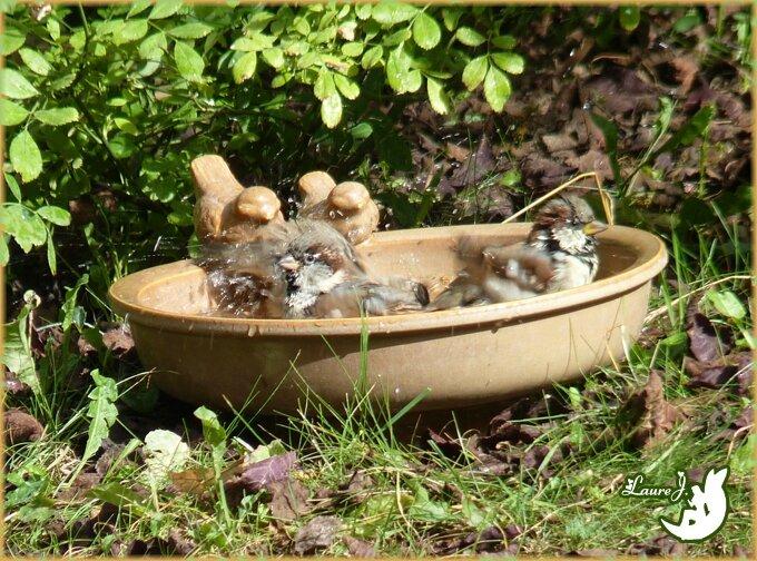 C 39 est l 39 heure de la toilette mon jardin du bonheur for Jardin 4 moineaux