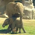 SAN DIEGO ELEPHANTS