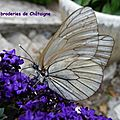 papillon transparent (1)